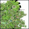 MICHEL CLEIS & SALVATORE FREDA - Uva Fragolina : 12inch