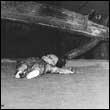 CICCIOLINA HOLOCAUST / SERMONIZER - Albeit Albeit / Sibelius Spiders : FORCED NOSTALGIA (BEL)