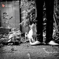 DJ ADLIB - Hi-Hat Club Vol. 6 - Haus & Garten : MELTING POT (GER)
