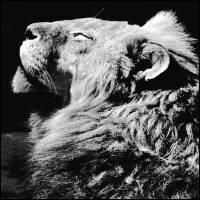 ANTHONY NAPLES - El Portal EP : 12inch