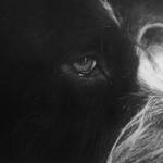 PANTHERA KRAUSE - Yorikke EP : RIOTVAN (GER)