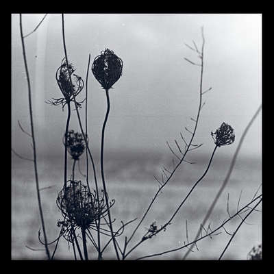 RECONDITE - Placid (2LP Album + MP3) (2018 Repress) : ACID TEST (US)