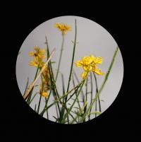 FLORIST / CHRISTIAN JAY / VARIOUS ARTISTS - Black Label 01 - Part 1 : 12inch