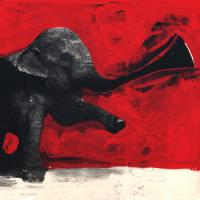 C'MON TIGRE - Elephant Rmx : 12inch