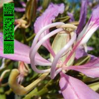 AVALON EMERSON - WHITIES 013 : WHITIES (UK)