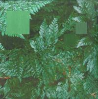 NEBRASKA - Metaphor To The Floor EP (feat. Laurence Guy) : 12inch
