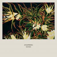 ANGOPHORA - Scenes : KEN OATH (AUS)