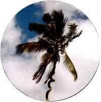 HARRISON BDP - Be Like Water EP : LOST PALMS (UK)