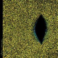 CLAN CAIMAN - カイマン族 : LP