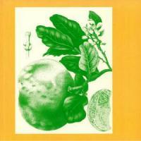 SUNNY BALM - Eucalypt : LP