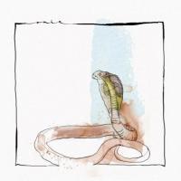 DAVID MAYER - Skanda EP : OUÏE <wbr>(GER)