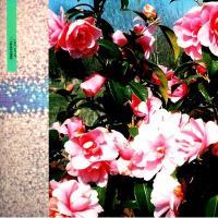 BIG MIZ - Passing Place W/ Mella Dee Remix : NOT ON LABEL