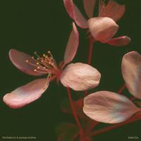 PACHAKUTI & YOUNG.VISHNU - Semilla : LP