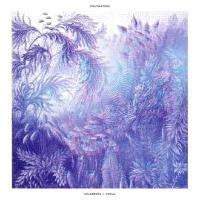 POLYNATION - Wildeburg / Coral (clear Vinyl) : 12inch