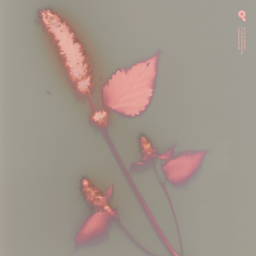 VA - In Good Hands vol.1 : LP