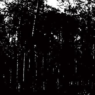 EDIT SELECT - Far North : 12inch