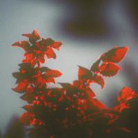 SSIEGE - Meteora : 12inch