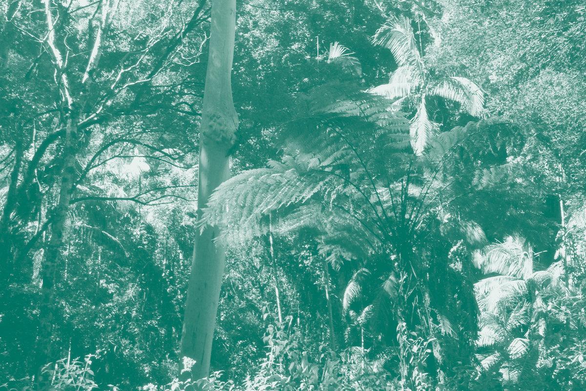 DAVID TOOP, AKIO SUZUKI & LAWRENCE ENGLISH - Breathing Spirit Forms : CD + Booklet gallery 1